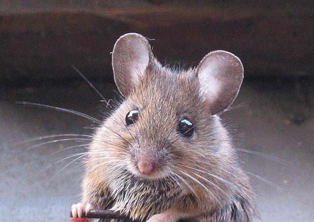 Eine Maus die in der Garage ist