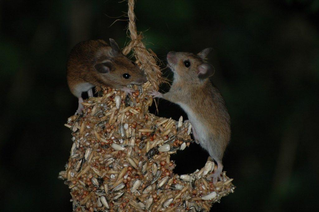 Mäuse in der Nacht
